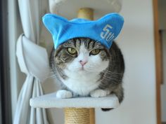 one of my favorites! Maru is now 5-years-old. お誕生日おめでとう、丸!