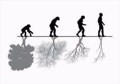 """""""Sólo cuando el último árbol esté muerto, el último río envenenado, y el último pez atrapado, te darás cuenta que no puedes comer dinero."""" – Sabiduría indoamericana – edigir"""