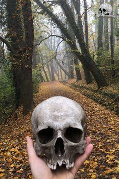 replika lidské lebky #lebka #lebkareplika #kosti #kostra #tatování #uměnílebka #fotografování Skull Decor, Halloween Skull, Skeleton, Bones, Art, Art Background, Kunst, Skeletons, Performing Arts