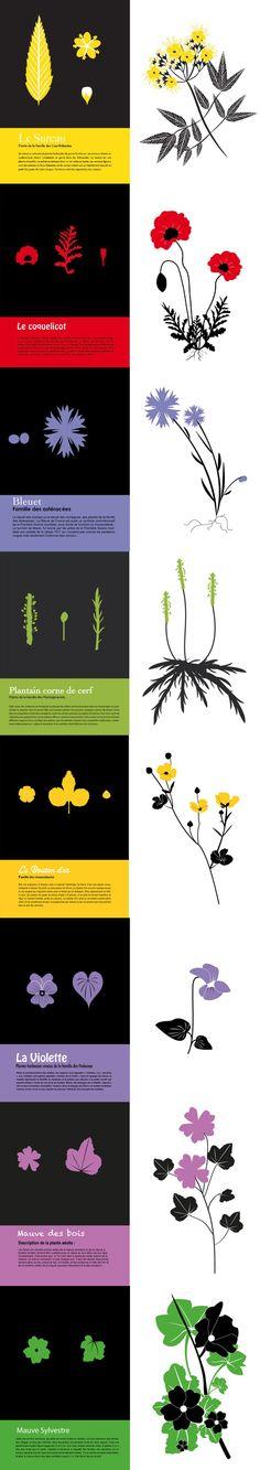 Sur le principe du bel herbier très graphique d'Emilie Vast , des élèves de BTS1 ont repris les principes de maquette de la graphiste, pour exécuter leur propre plante sur Illustrator.