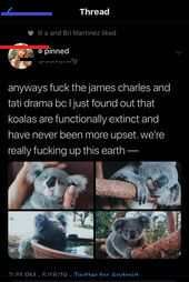 Actually that's because Koalas are slowly poisoned by their food source (Euc. Actually that's because Koalas are slowly poisoned by… Book Publishing, Drinking Water, Food, Indoor Garden, Drinks, Stupid, Garden Ideas, Trees, Modern
