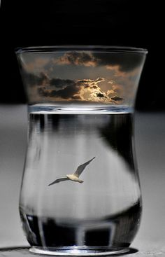Free, happy, albeit a seagull in me, there is a dark cloud in my emptiness ..