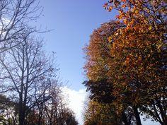 Outono em Paris - caminho Av. champs Elysées - Foto: Arquiteta Cláudia F. Ferreira