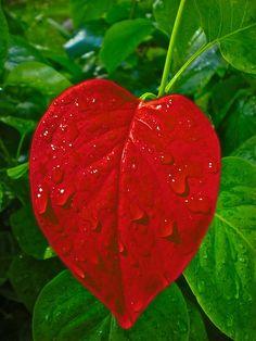 Heart, Journal, Love, Valentine, Valentine'S Day