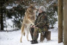 The Wolf Man! Werner Freund, German Wolfman, Feeds Wolves From His Mouth As Pack's 'Alpha Male' A former military man has devoted his life to the beautiful but dangerous wolves that inhabit his wolf park in Germany. Wolf Spirit, Spirit Animal, Beautiful Creatures, Animals Beautiful, Unusual Animals, Unusual Pets, Exotic Animals, Animals And Pets, Cute Animals