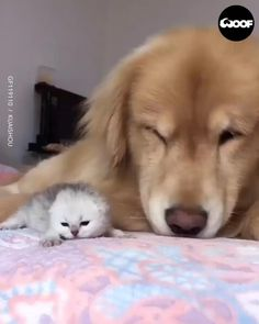 Cute Little Animals, Cute Funny Animals, Cute Puppies, Dogs And Puppies, Adorable Dogs, Teacup Puppies, Baby Dogs, Cute Animal Videos, Tier Fotos