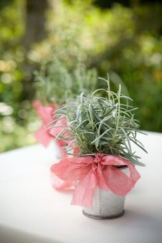 Rosemary wedding favour - little herbs as gifts or table decoration w/ Pink bow.