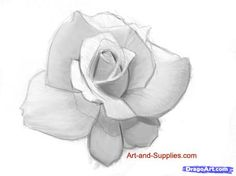 how to draw a rose in pencil step 6