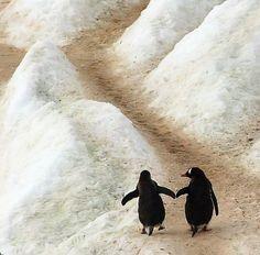 Катя Lexx — «Пингвины» на Яндекс.Фотках