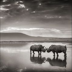 Photograph by Nick Brandt