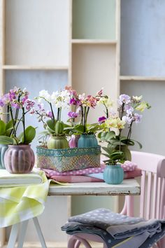 A table of #phalaenopsis plants #houseplant #orchids