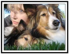 Girl with her Shelties