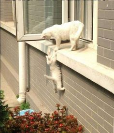 funny-cats-214-32.jpg 620×725 pixels
