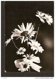 5k. Germany, FLORA bunch of flowers daisy camomile bouquet - real photo Meinke - 1970s