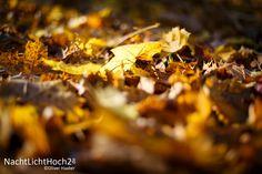 #sunny #november #part II