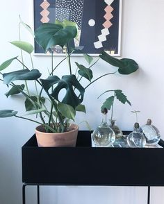 Wild wandering plant - gorgeous plant box, art on the wall and glass ware. Nordic Interior Design, Plant Box, Big Vases, Black And White Interior, Office Plants, Decorating With Pictures, Interior Plants, Scandinavian Home, Fresh Flowers