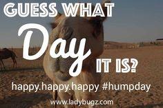 Our #happyhumpday meme!