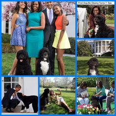 "Happy 7th Birthday First Dog Bo Obama   ""Sasha and Malia … you have earned the new puppy that's coming with us to the White House."" With those words — uttered during President-elect Barack Obama's victory speech in 2008 — America began its love affair with the first family's new pet. ""Bo Obama,"" they'd call the Portuguese water dog, who would soon find himself chasing tennis balls and running on the lush White House lawn — often alongside one of the most powerful men in the world (and later ..."