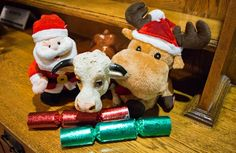 Ferdi having a bit of a powwow with his Christmas mates and making sure everyone is on track for Christmas Day. It is Ferdi's favourite day of the year and it is very serious business!