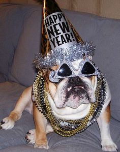 English Bulldog Happy new yr ! Cute Puppies, Cute Dogs, Dogs And Puppies, Doggies, Animal Hats, Nouvel An, Funny Animal Pictures, Dog Life, Puppy Love