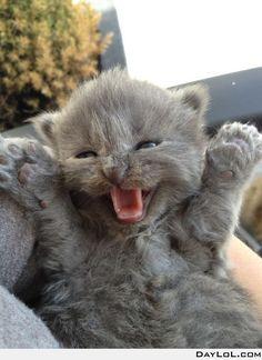happy little kitty