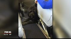American Airlines Apologizes after Disabled Boy, Service Dog Kicked off Flight