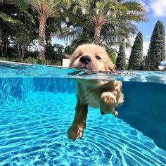 Dog Breeds Little .Dog Breeds Little Super Cute Puppies, Cute Little Puppies, Cute Little Animals, Cute Dogs And Puppies, Cute Funny Animals, Baby Dogs, Doggies, Funny Puppies, Pics Of Cute Dogs