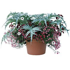 Great Container Gardens -full sun