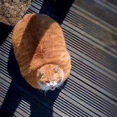 Big cat loaf