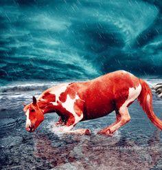 Imagini ,miscatoare,Gifuri,cu sclipici,stralucesc,blog,informatii,urari,mesaje,felicitari zi nastere: Cai gif ,horse ,furtuna fulger imagini miscatoare ...