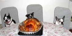 Happy Dogs-Giving