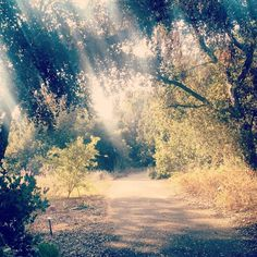 There's never a bad time to take a stroll at Rancho Santa Ana Botanic Garden.