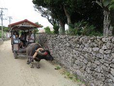 Japan Blog - Tokyo Osaka Nagoya Kyoto: Taketomi Water Buffalo Carts