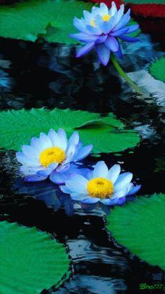 flores azules gif