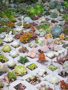 Succulent planting idea