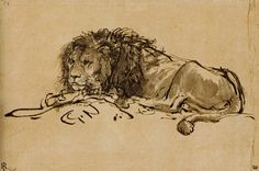 lonequixote: Lion Resting (sketch) by Rembrandt (via: @lonequixote)