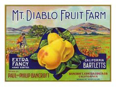 Mt. Diablo Fruit Farm knew a thing about produce. In the 1930s their pears place first in the state 8 out of 9 years.