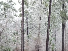 Ice in South Georgia