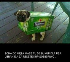 Humor, Dogs, Animals, Heineken, Animales, Animaux, Humour, Pet Dogs, Funny Photos