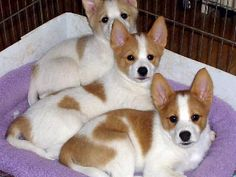 My dog Lexie in the middle when she was a pup