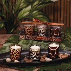 Club Pack of 18 Safari Cheetah Zebra Giraffe Glass Votive Scented Candles