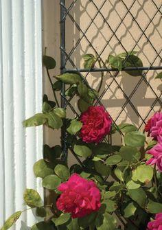 Diamond wirework wall trellis - Hand wooden lattice trellis panels from Garden… Garden Trellis Panels, Wall Trellis, Metal Trellis, Trellis Fence, Rose Trellis, Over Door Canopy, Door Canopy Porch, Porch Doors, Porch Canopy Designs