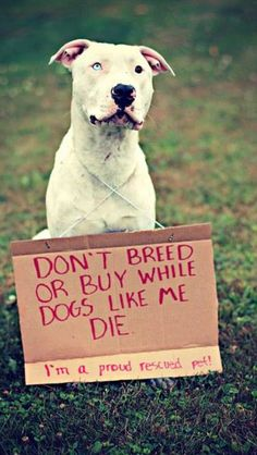 Please stop backyard breading pits. Because of fkn assholes like you, millions of them a year are being destroyed! Put to sleep because you people are fucking piece of shit douchebags! You deserve a bullet right between your eyes. And I'll be the one to do it if I ever catch one of you fucking piece of shit!