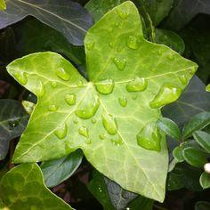 Effetti di pioggia