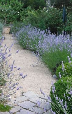 lavender and boxwood garden path