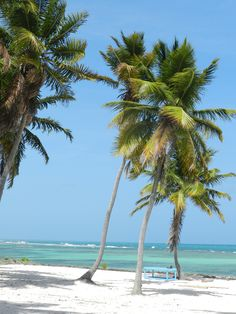 Heaven on earth! Punta Cana Vacations, Saona Island, Greater Antilles, Island Beach, Dominican Republic, Archipelago, Heaven On Earth, Palm Trees, Caribbean