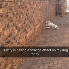 32 Funny Animal Pictures – Funnyfoto | Funny Pictures - Videos - Gifs - Page 18