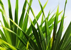 The Top 10 Air-Purifying Plants