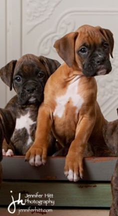 5 Dog Breeds that are easiest to train, I didnt think about the breed#04! I love boxers! They are curious, playful and hilarious. I know from experience that they have a well developed sense of humor. That last part does pose some challenge to training, I think, but they're worth it!