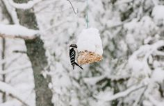 Spring is coming in Nova Scotia! Spring Birds, Spring Is Coming, Nova Scotia, Bird Feeders, Cute Babies, Christmas Ornaments, Holiday Decor, Outdoor Decor, Baby